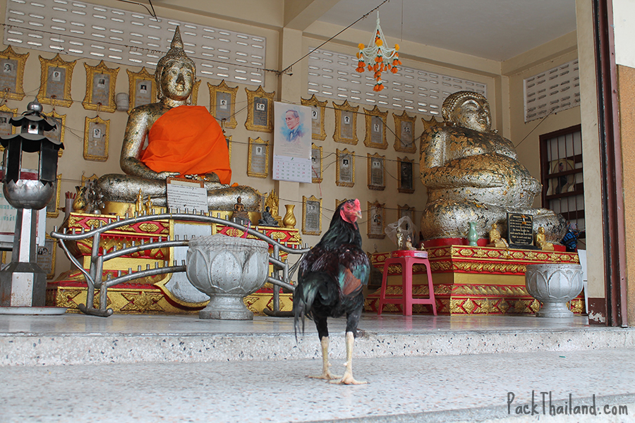 A temple rooster