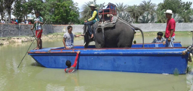 An elephant is loaded onto a raft to show that feeding crocodiles at the world's scariest tourist attraction in Thailand is safe