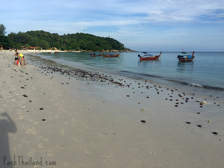 Hundreds of jellyfish were washed up on Koh Lipe Pattaya Beach one day after a big storm