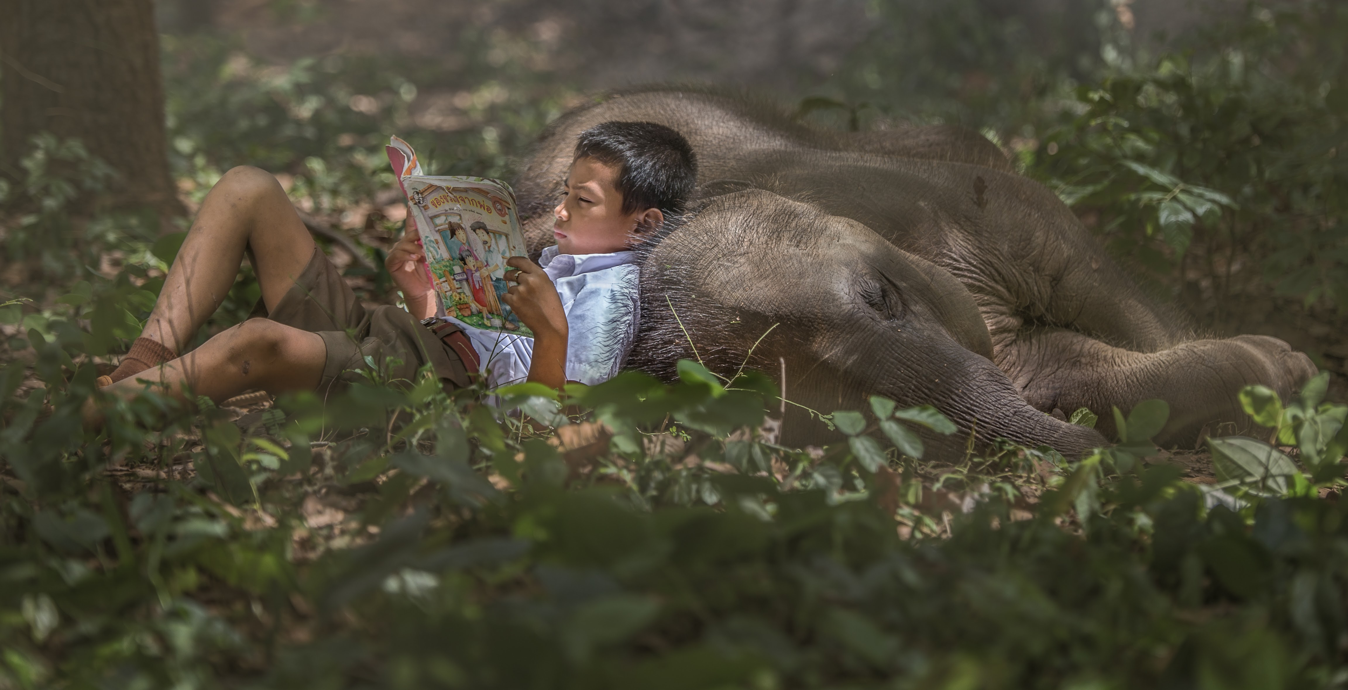 Reading a comic lying against a baby elephant