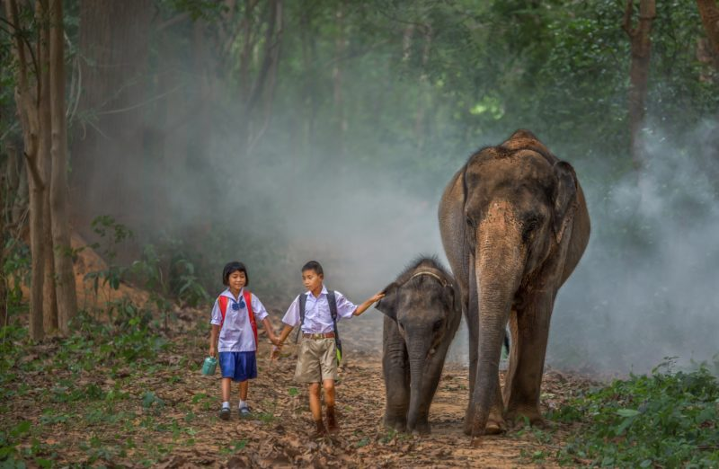 Two children walking to school with their pets in Surin Elephant village