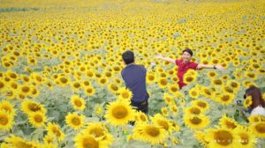 Thais posing for selfies in the sunflower field tour in Nakhon Ratchasima