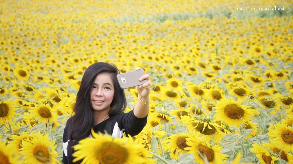 Posing for a selfie among the Thai sunflowers
