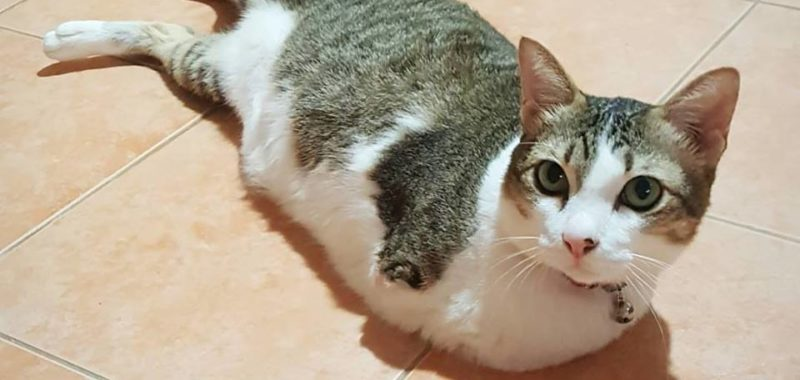 Able Meow, the kangaroo cat with no front paws who gets around by hopping